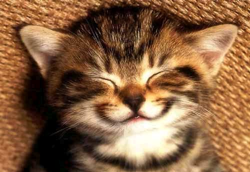 smile-kitten-large.jpg
