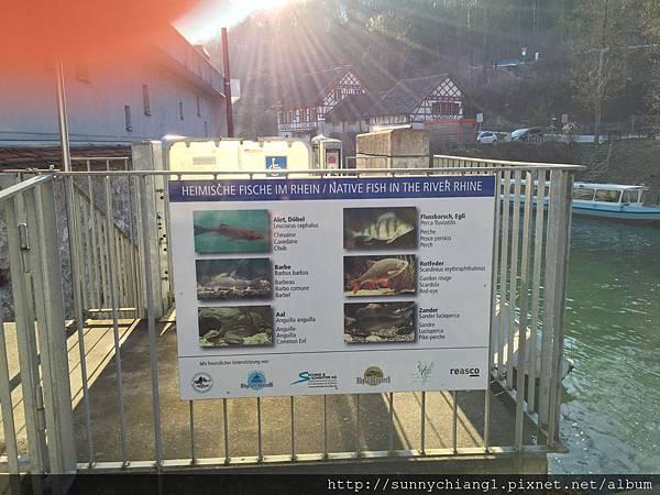 萊茵河落瀑10.jpg