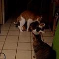 cat-03.jpg