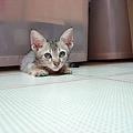 cat-07.jpg