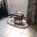 cat-08.jpg