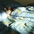 cat-09.jpg