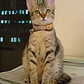 cat-104.jpg
