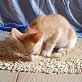 cat-117.jpg