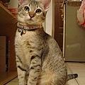 cat-122.jpg