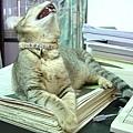 cat-131.jpg