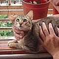 cat-145.jpg