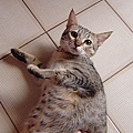 cat-153.jpg
