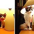 cat-157.jpg
