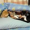cat-158.jpg