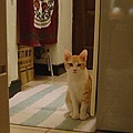 cat-159.jpg