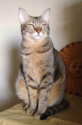 cat-420.jpg