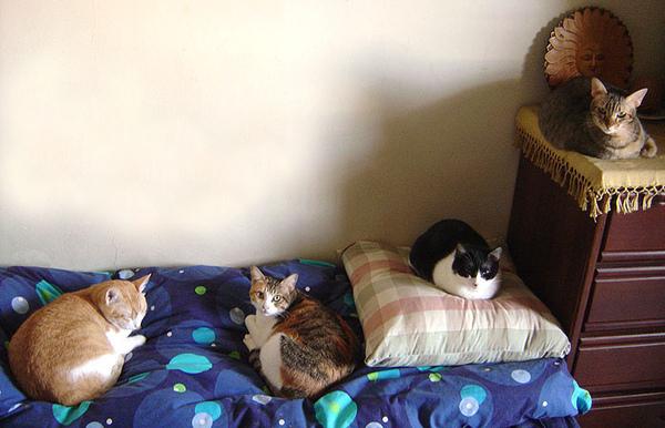 cat-419.jpg