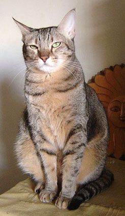 cat-421.jpg