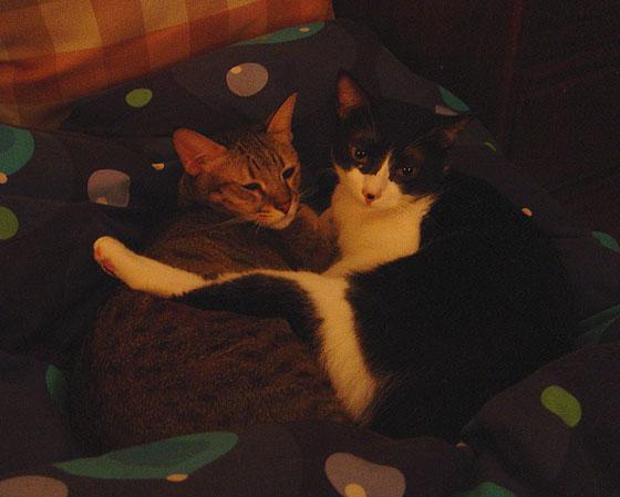 cat-423.jpg