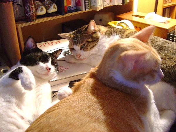 cat-411.jpg