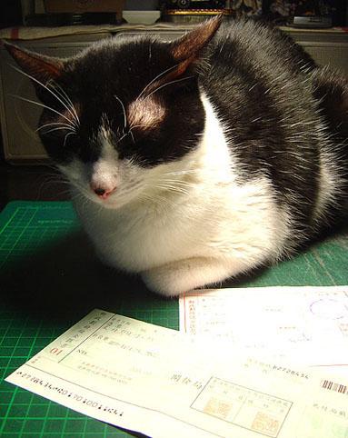 cat-433.jpg
