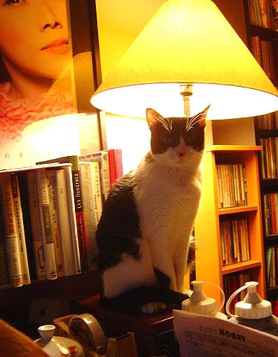 cat-429.jpg