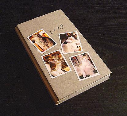 cat-439.jpg
