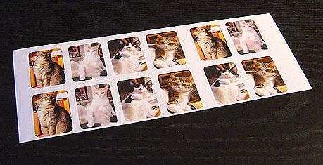 cat-437.jpg