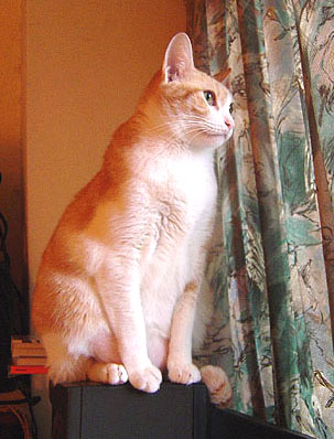 cat-441.jpg