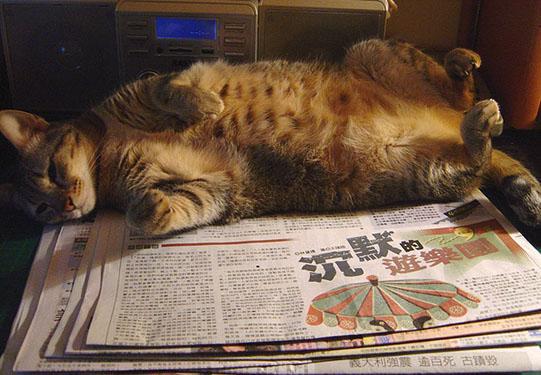 cat-446.jpg