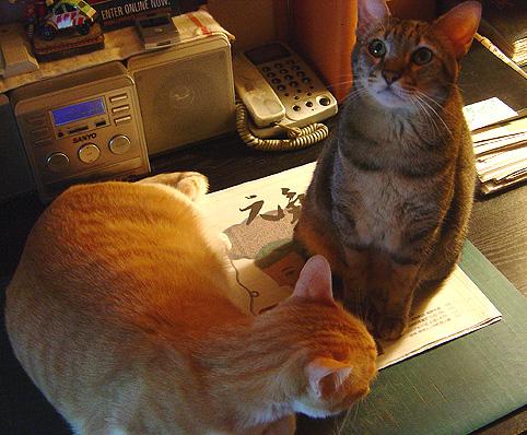 cat-443.jpg