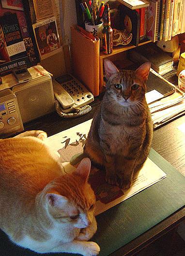 cat-444.jpg