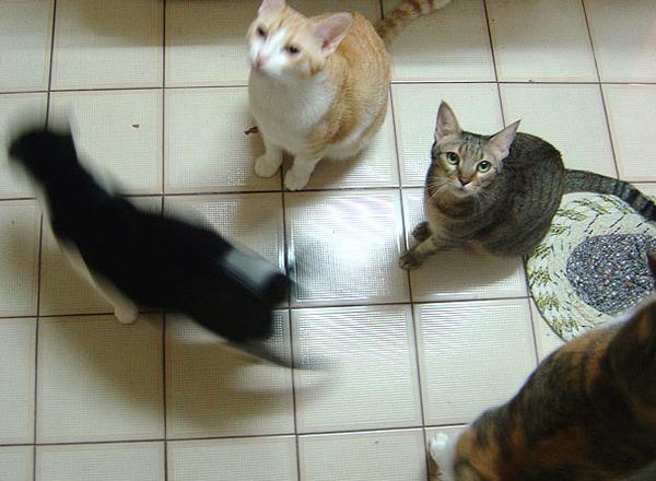 cat-461.jpg