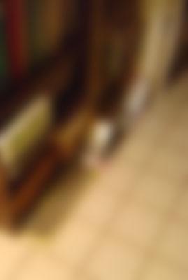 DSC06385.jpg