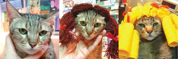cat-539.jpg