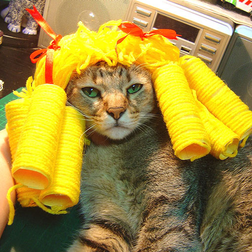 cat-537.jpg
