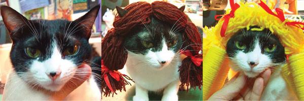 cat-541.jpg