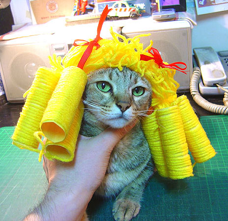 cat-528.jpg