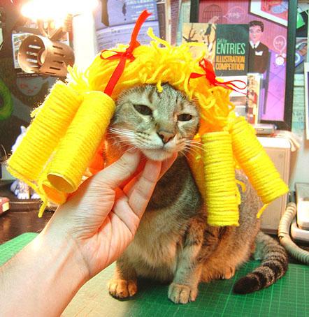 cat-526.jpg