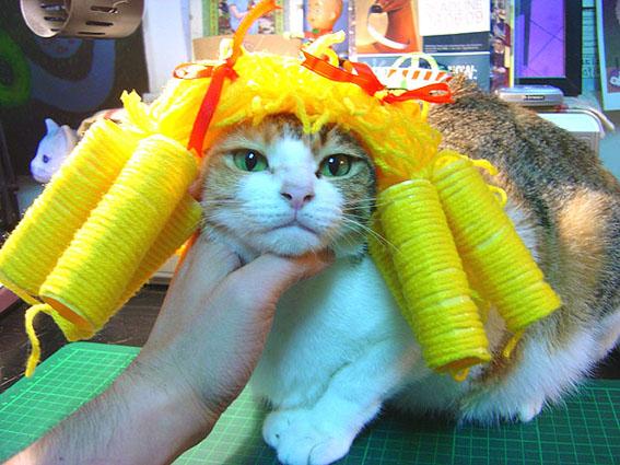 cat-533.jpg
