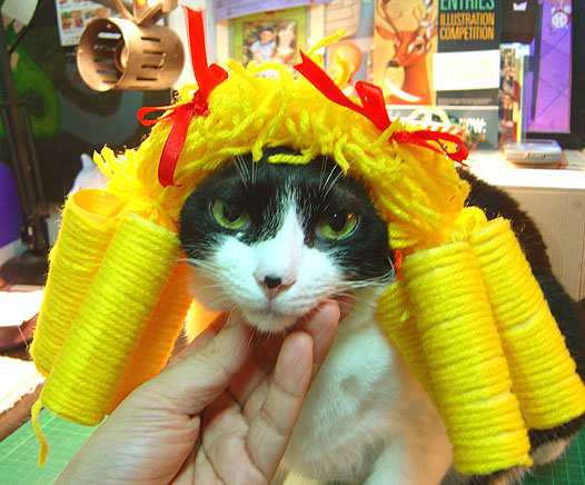 cat-529.jpg