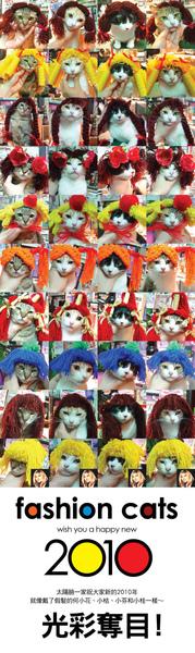 sunnycats.jpg