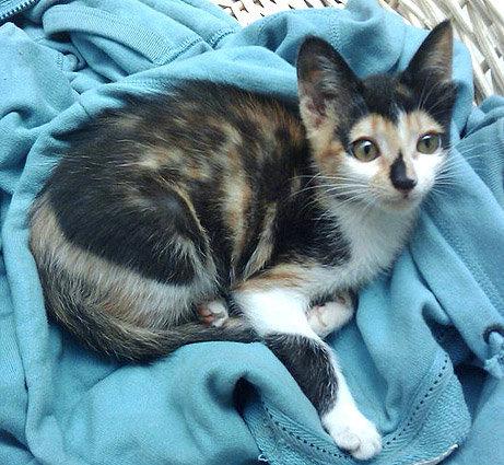 cat-20100420.jpg