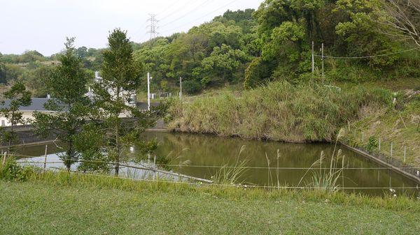 草皮區旁魚池