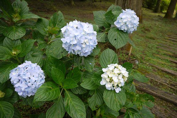 好美的花呢~~