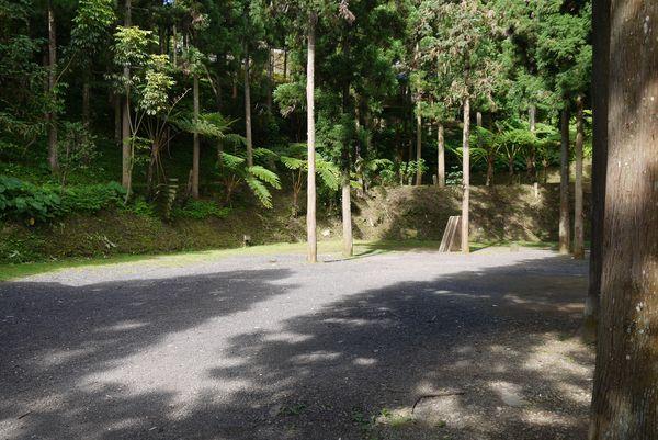 杉木林C區