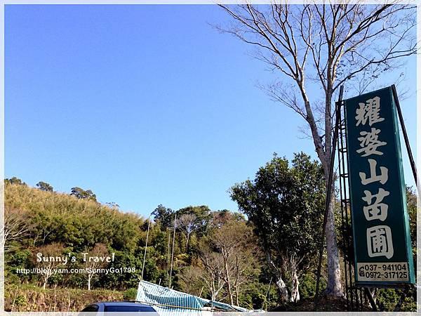 9耀婆山草莓園 (4).JPG