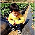 9耀婆山草莓園 (7).JPG