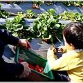 9耀婆山草莓園 (8).JPG