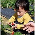 9耀婆山草莓園 (10).JPG