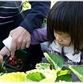 9耀婆山草莓園 (11).JPG