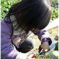 9耀婆山草莓園 (12).JPG
