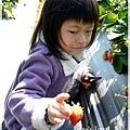 9耀婆山草莓園 (13).JPG