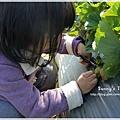 9耀婆山草莓園 (14).JPG
